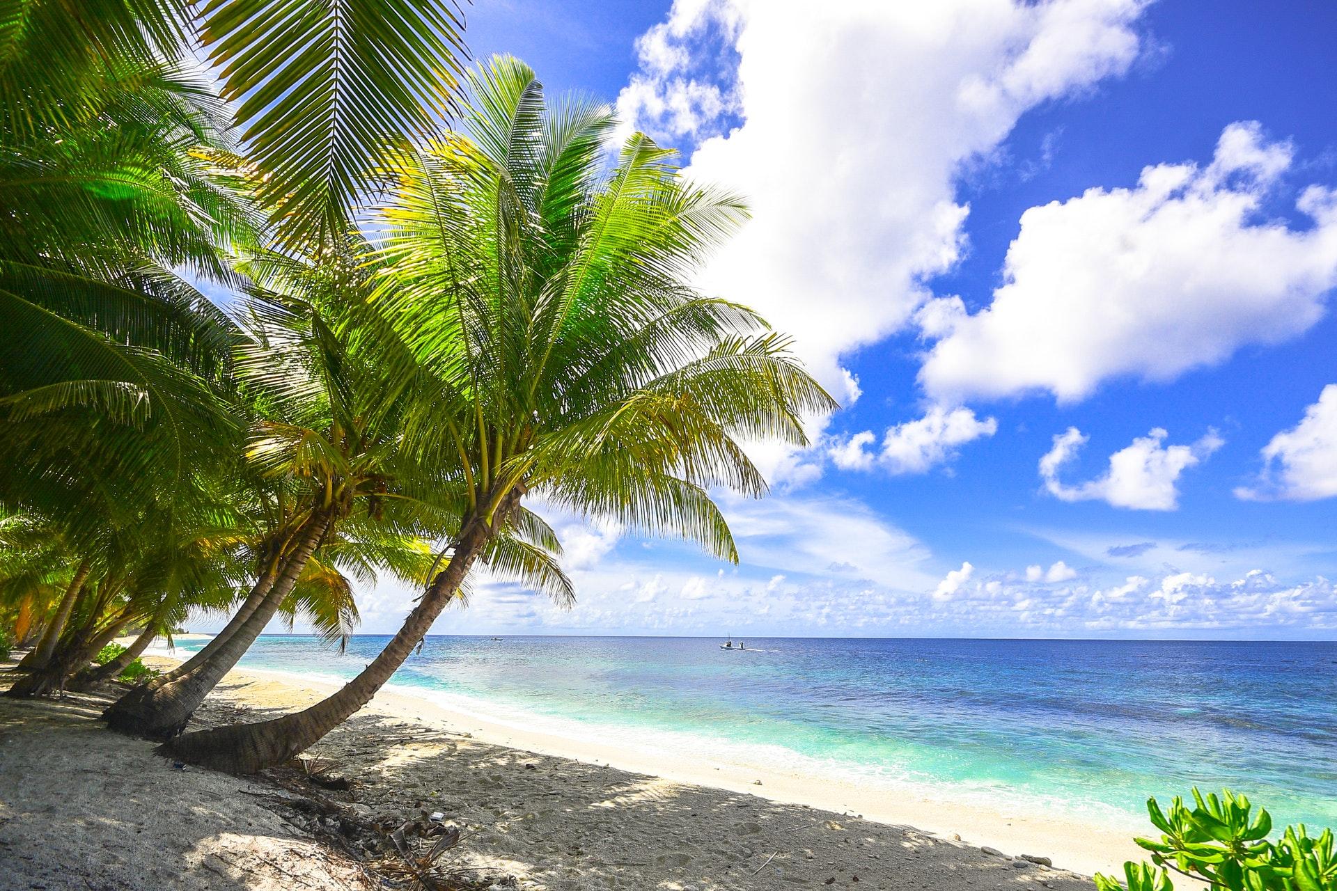 tropiki i palmy